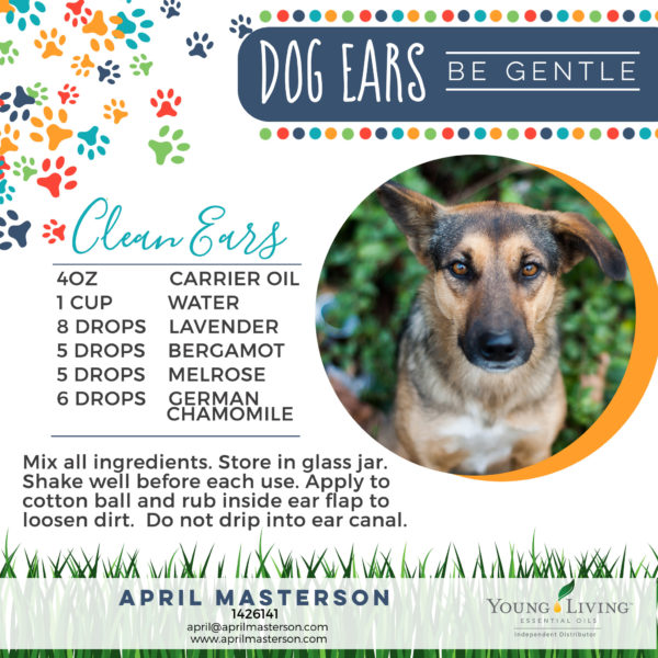cleaning dogs ears with essential oils