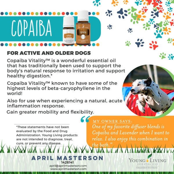 Dogs and Copaiba